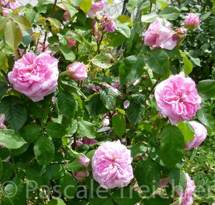 20120603-Rosen 7)