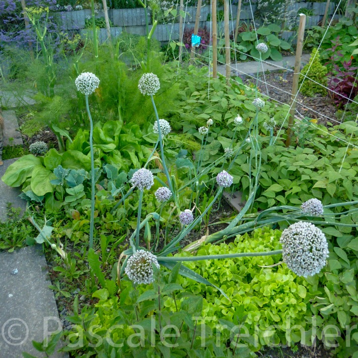 20120716-Gemüsegarten - 1.jpg