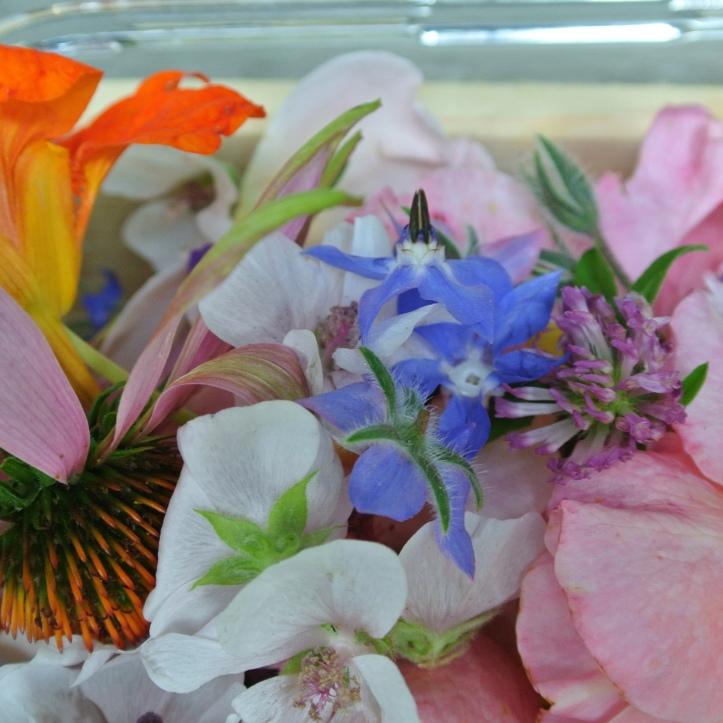 20160901-Blüten  007.jpg