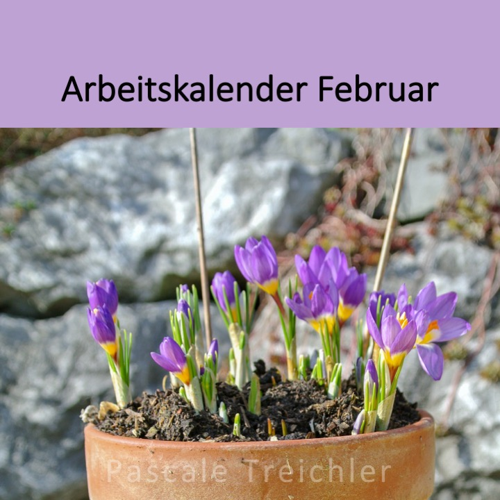 Garten Arbeitskalender Februar