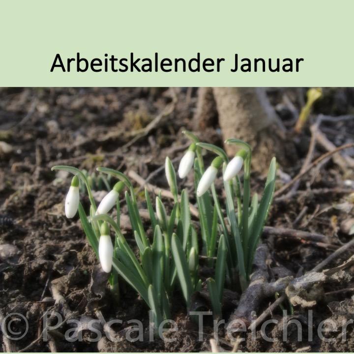 Garten Arbeitskalender Januar