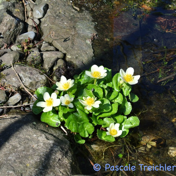 Gartenblog 2017.03-40 Kopie