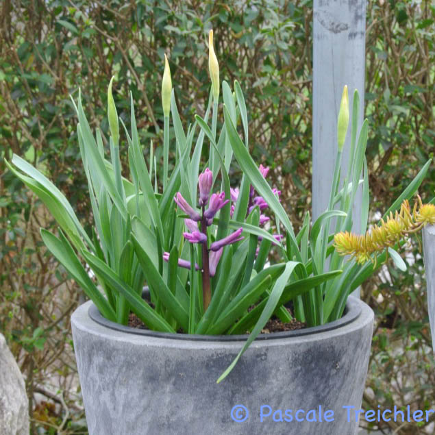 Gartenblog 2017.03-41