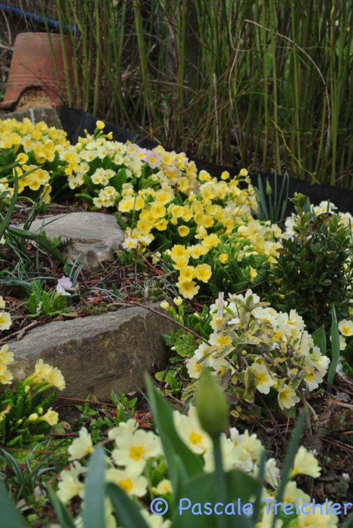 Gartenblog 2017.03-42