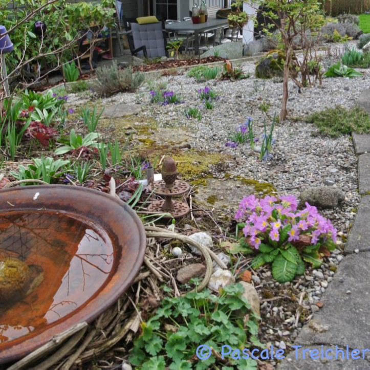 Gartenblog 2017.03-43