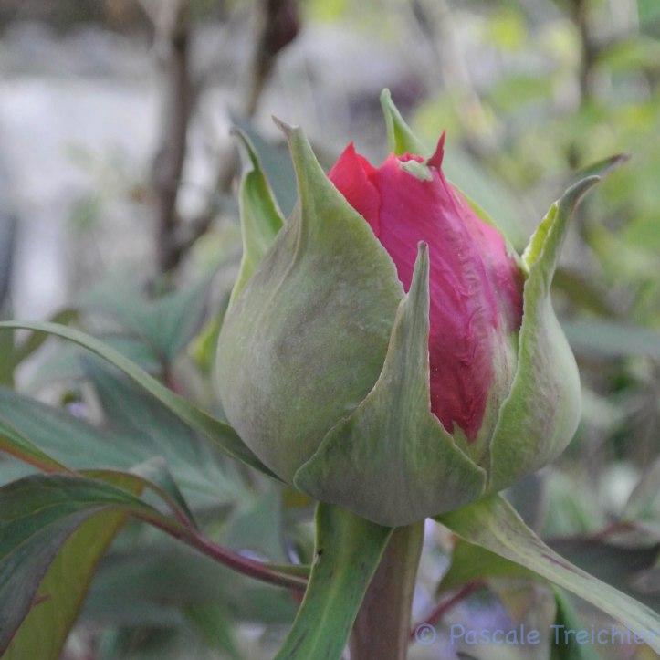 2017.05 Flowerday-10