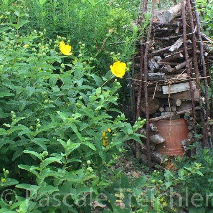 Gelbes Beet - Insektenhotel - 4010