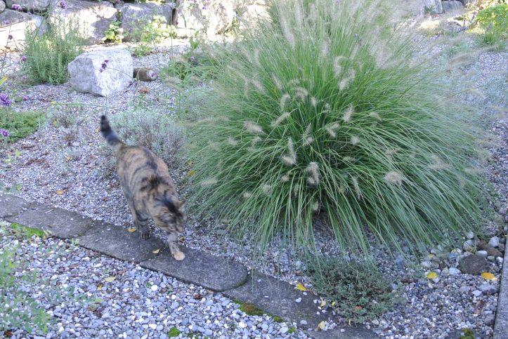 Katze - Gräser 6214