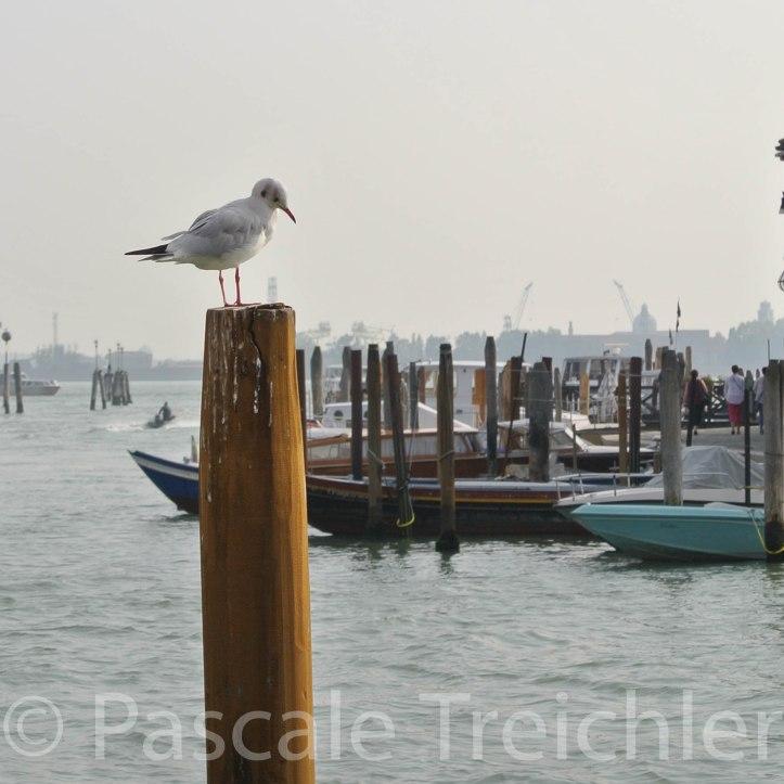 Venedig 6581-2
