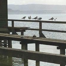 Am See gegessen