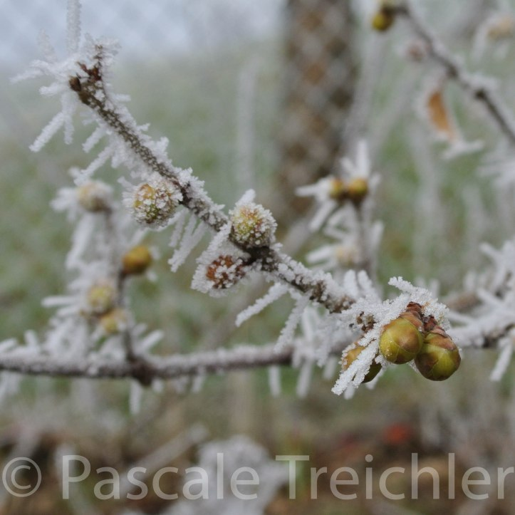 Frost 12._3582-2