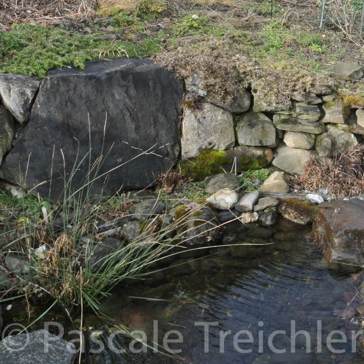 Teich - 2015.02 006 (4)-2.jpg