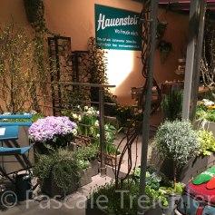 Pflanzen zum Kaufen